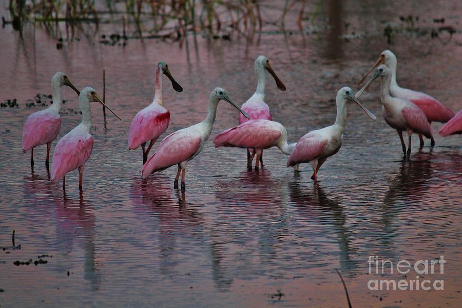 Bird Photograph - Rosette Roundup by Keri West