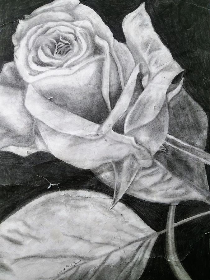 Rose Drawing - Rosie  by Jessica Stewart