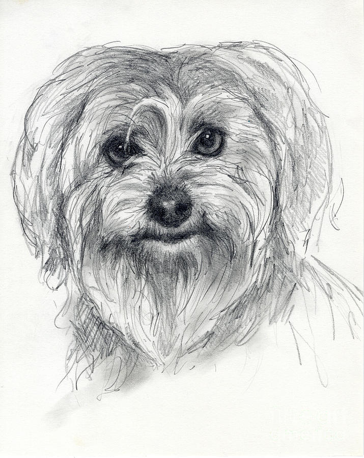 Dog Drawing - Rosie by Tim Thorpe