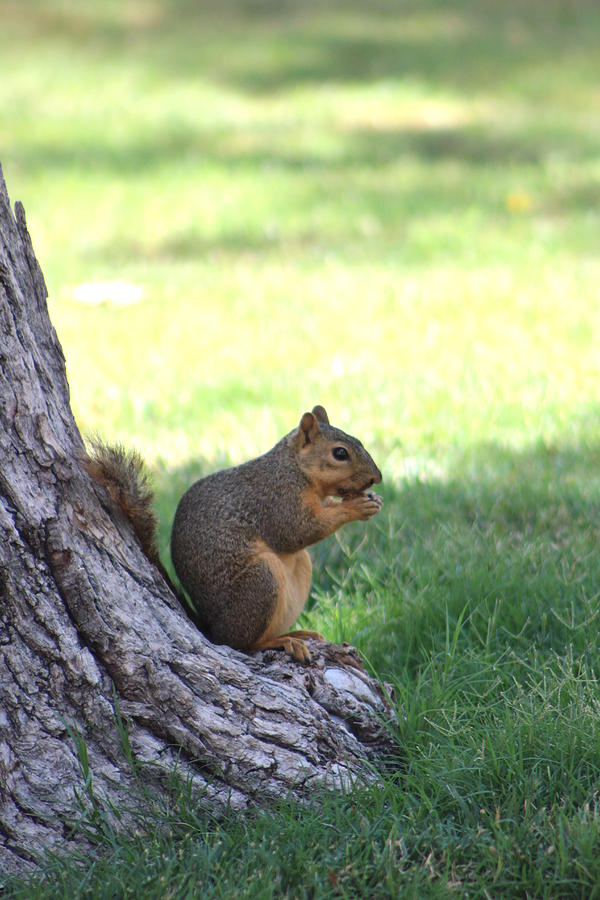 Squirrel Photograph - Roswell Squirrel by Colleen Cornelius