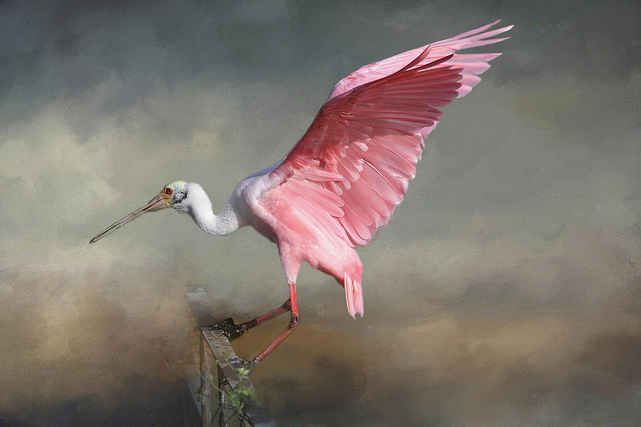 Roseate Spoonbill Photograph - Rosy by Donna Kennedy
