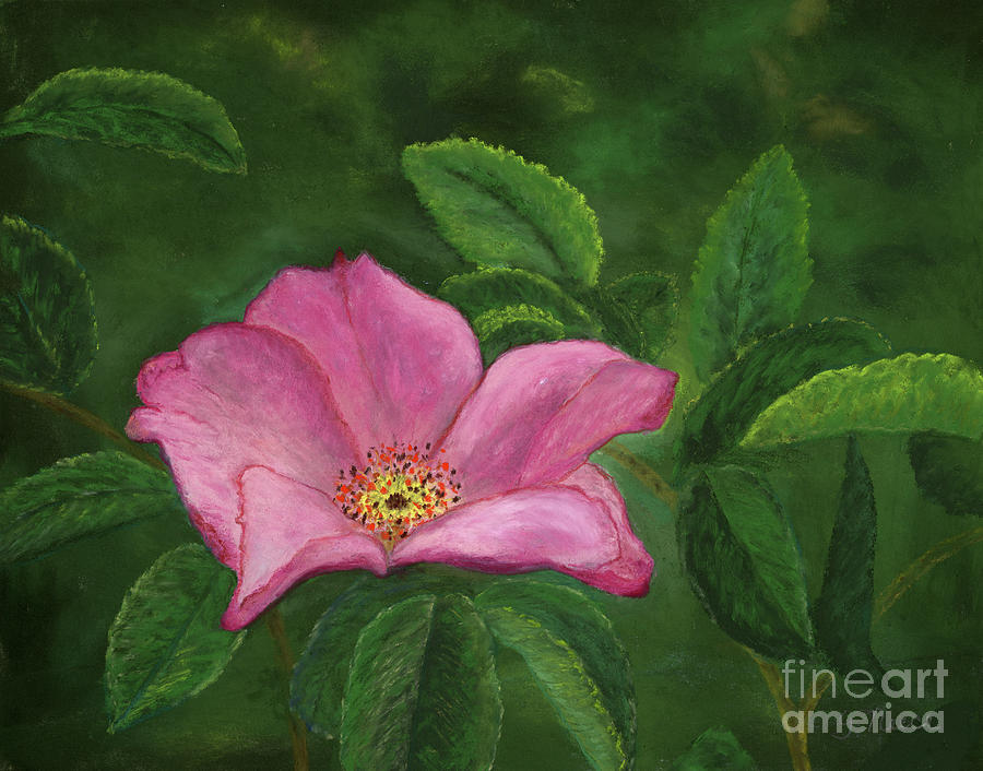 Rosy by Ginny Neece