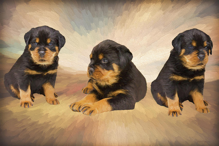 Rottie Puppies Painting Painting By Ericamaxine Price