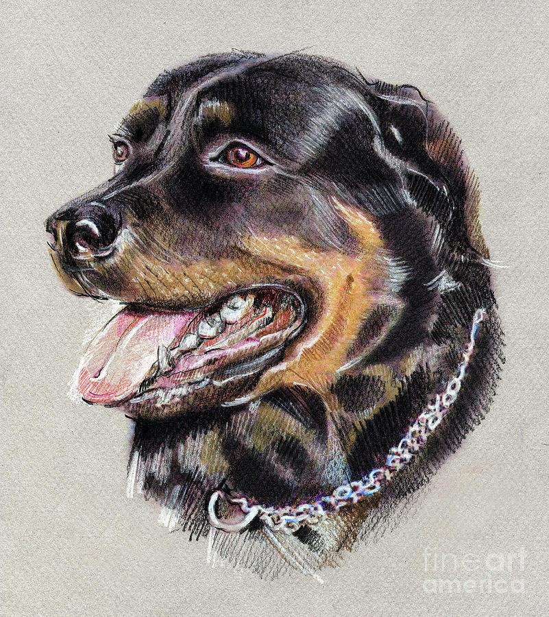 Rottweiler Portrait Drawing