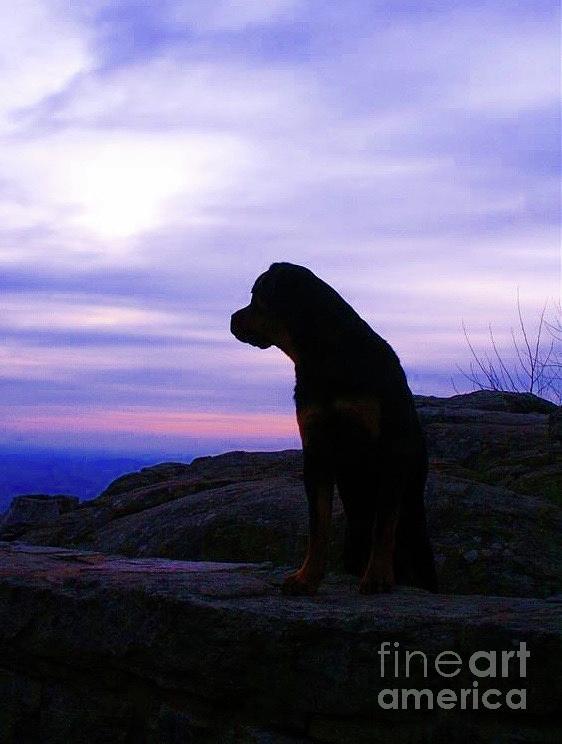 Rottweiler Sunrise 1 Photograph by Gregory E Dean