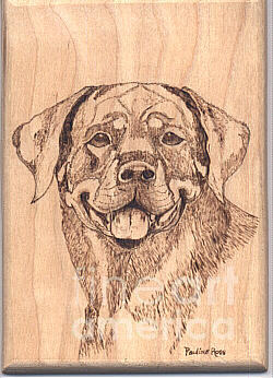 Dog Pyrography - Rottweiller by Pauline Ross