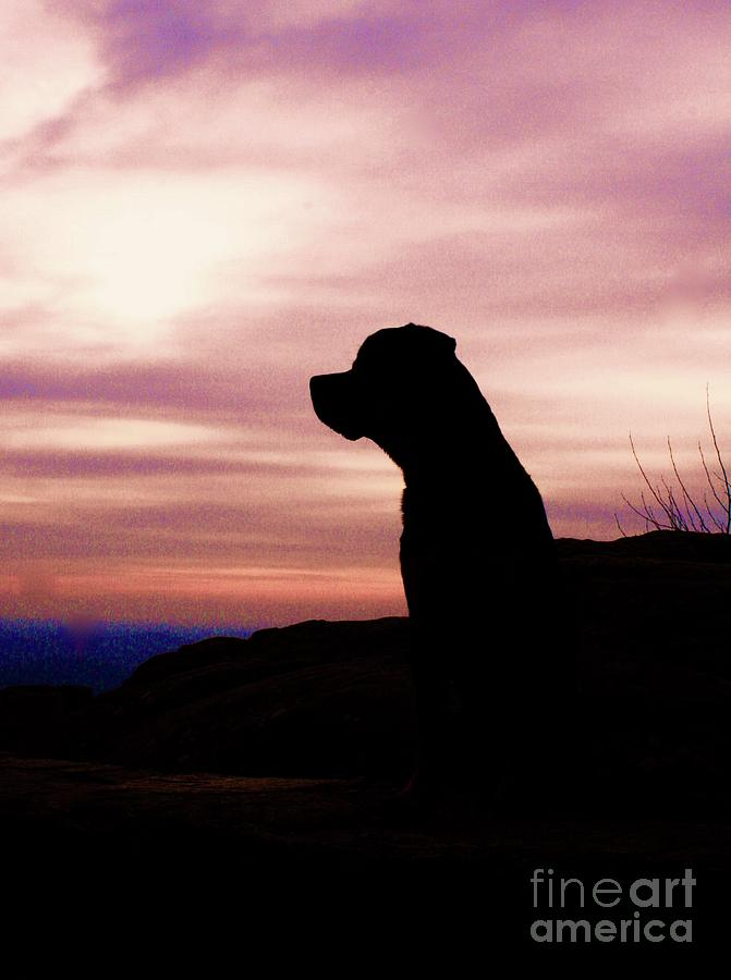 Rottweiler Sunrise Photograph by Gregory E Dean
