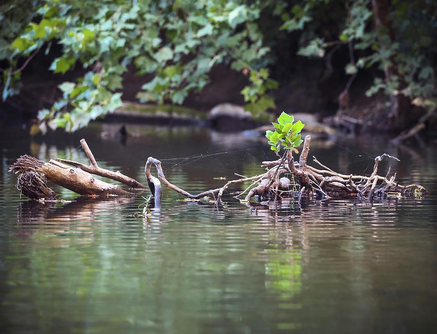 Creek Photograph - Roubidox Creek by Hyuntae Kim