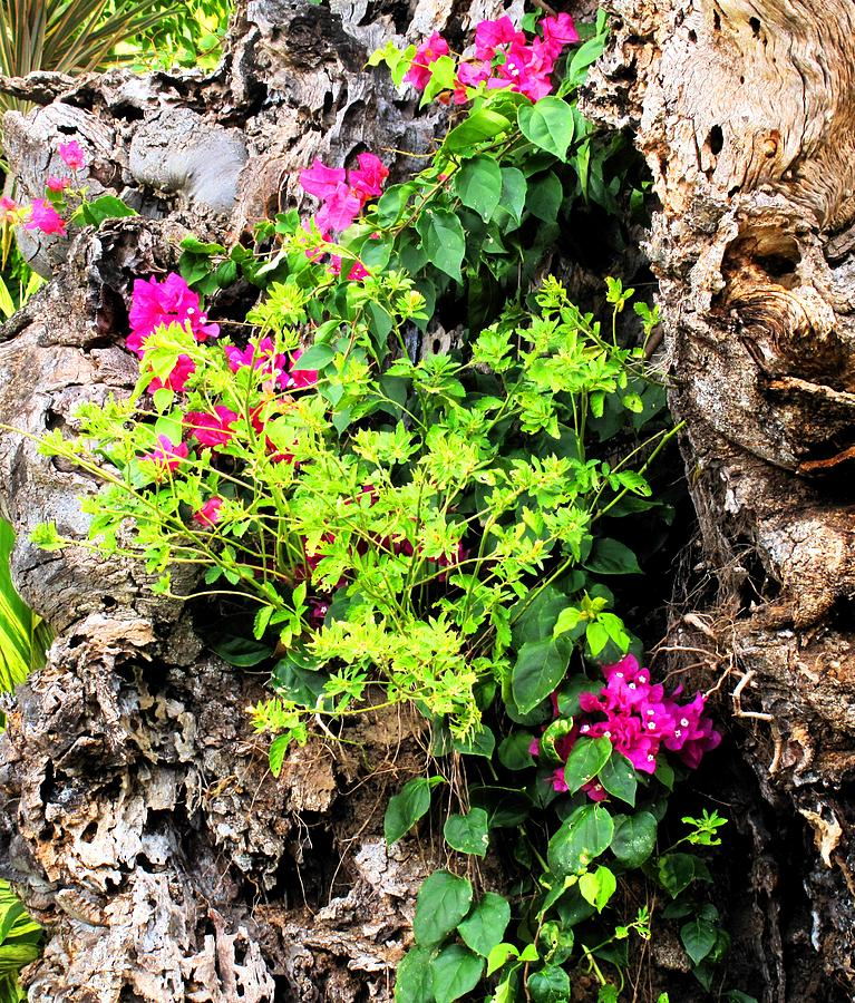 Flowers Photograph - Rough Beauty by Ian  MacDonald