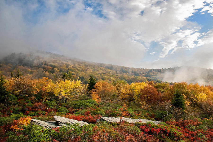 Rough Ridge Autumn, Blue Ridge Parkway S by Tommy  White