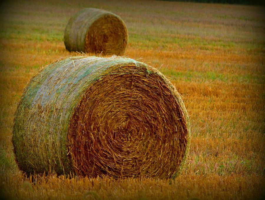 Round Hay Bales by Kimberly Woyak