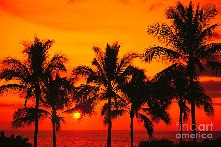 Bright Photograph - Row Of Palms by Bill Schildge - Printscapes