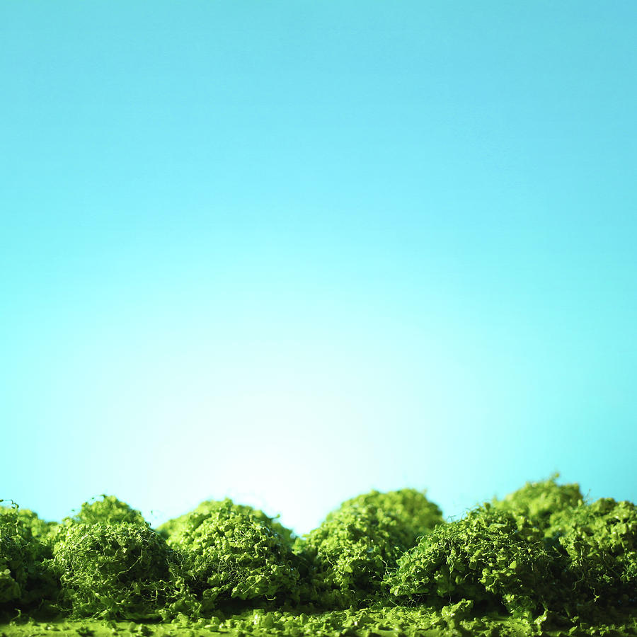 Row of Trees by Stephen Dorsett
