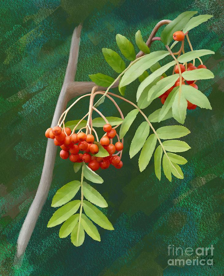 Rowan Painting - Rowan Tree by Ivana Westin