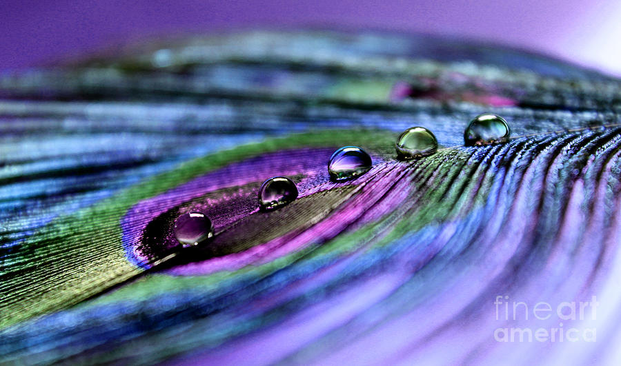 Peacock Feather Photograph - Soul Reflections by Krissy Katsimbras