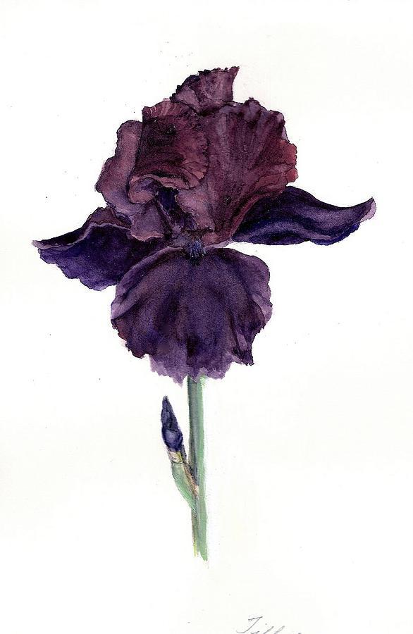 Botanical Painting - Royal Ruffles by Susan Tilley
