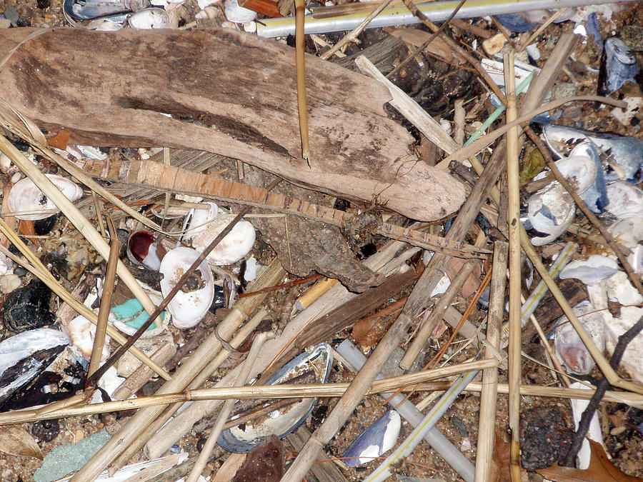 Nature Photograph - Rubbish by Bill Ades