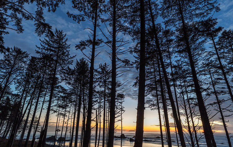 Water Photograph - Ruby Beach Through The Trees by Michael Holly