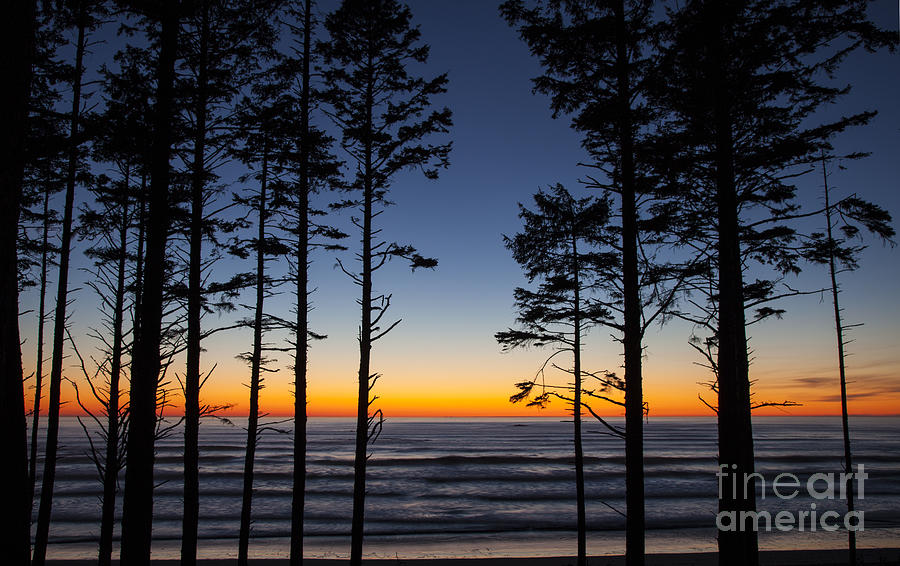 Ruby Beach Trees #4 by Timothy Johnson