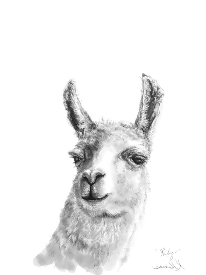 Llamas Drawing - Ruby by K Llamas