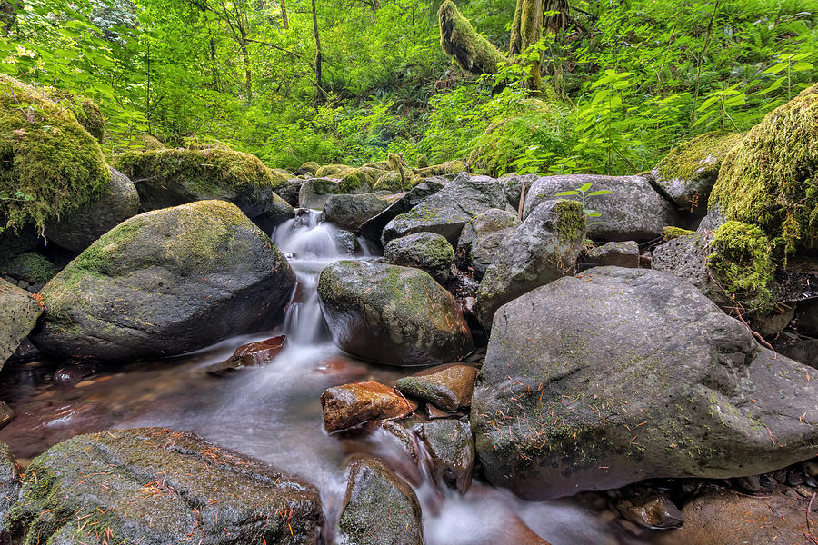 Ruckel Creek Photograph - Ruckel Creek by David Gn