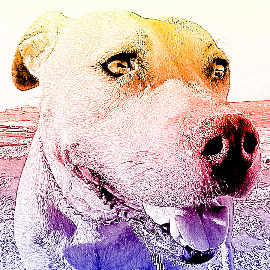 Dog Mixed Media - Rudy by Lucia Sirna