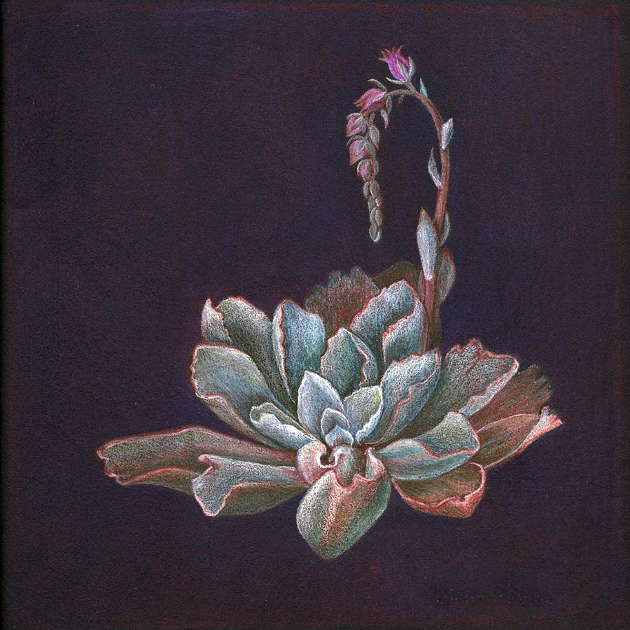 Echeveria Painting - Ruffles In Bloom by Diane Harm