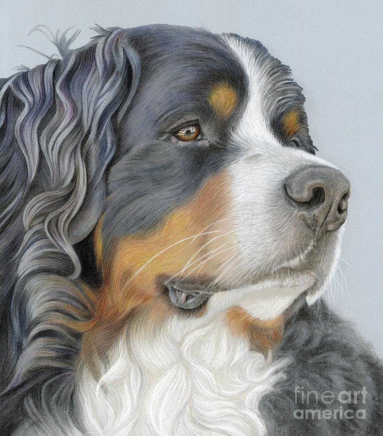 Bernese Painting - Regal And Relaxed by Donna Mulley