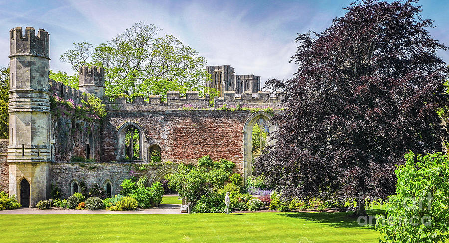 Bishops Palace Photograph - Ruins Of Bishops Palace Wells England by Lexa Harpell