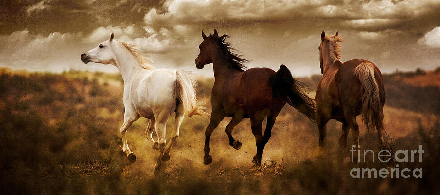 Running Horses Photograph - Run For The Hills by Patty Hallman