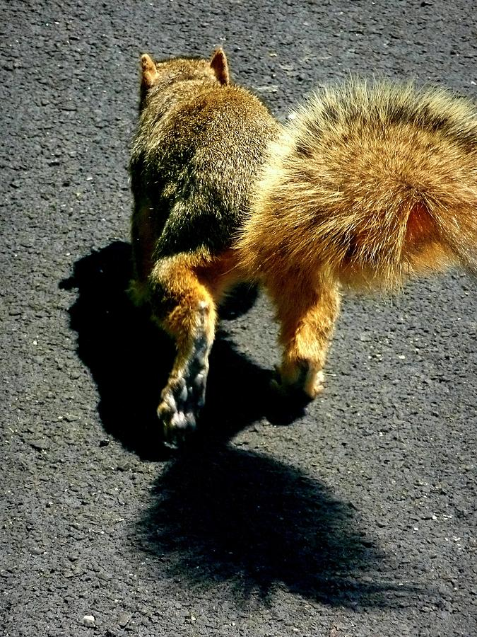 Fox Squirrel Photograph - Runaway Fox Squirrel by Beth Akerman