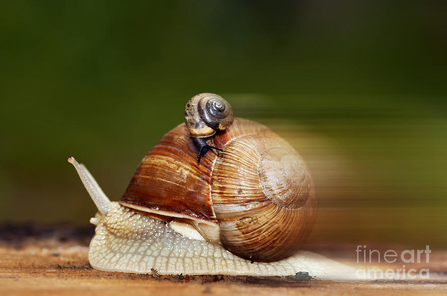 Snail Photograph - Runaway Snail by Michal Boubin