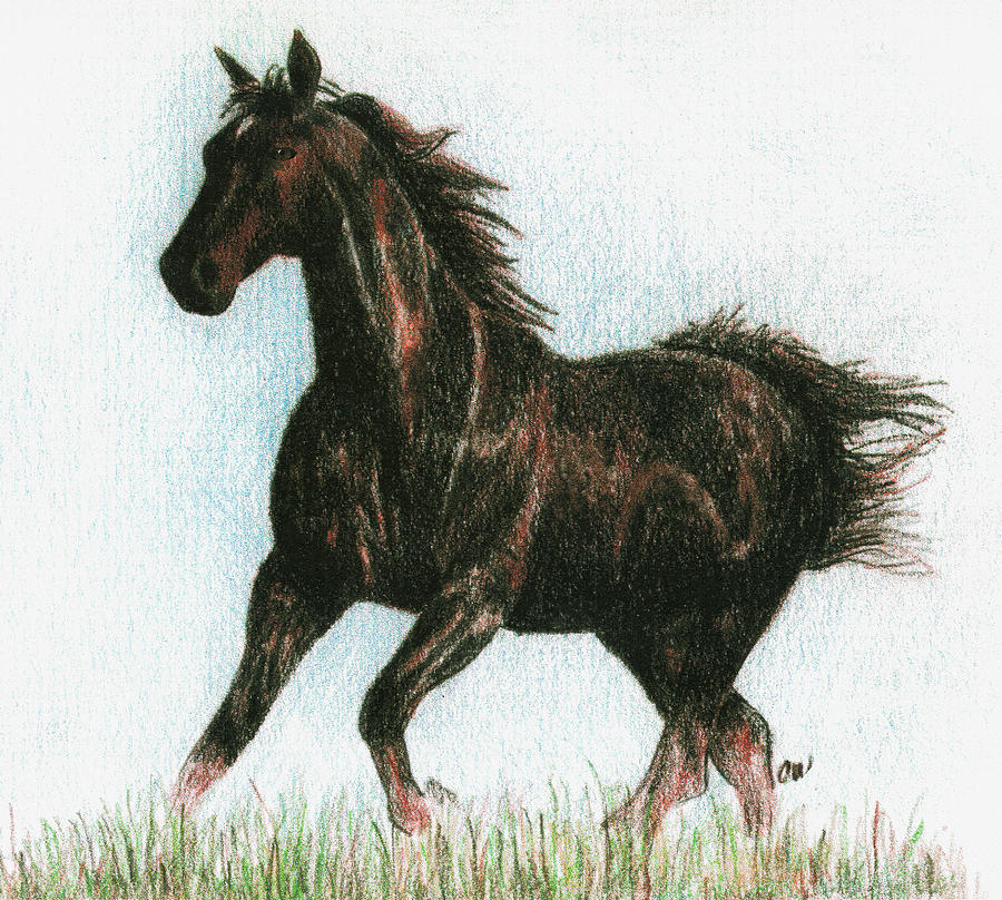 Horse Drawing - Running Free by Arline Wagner