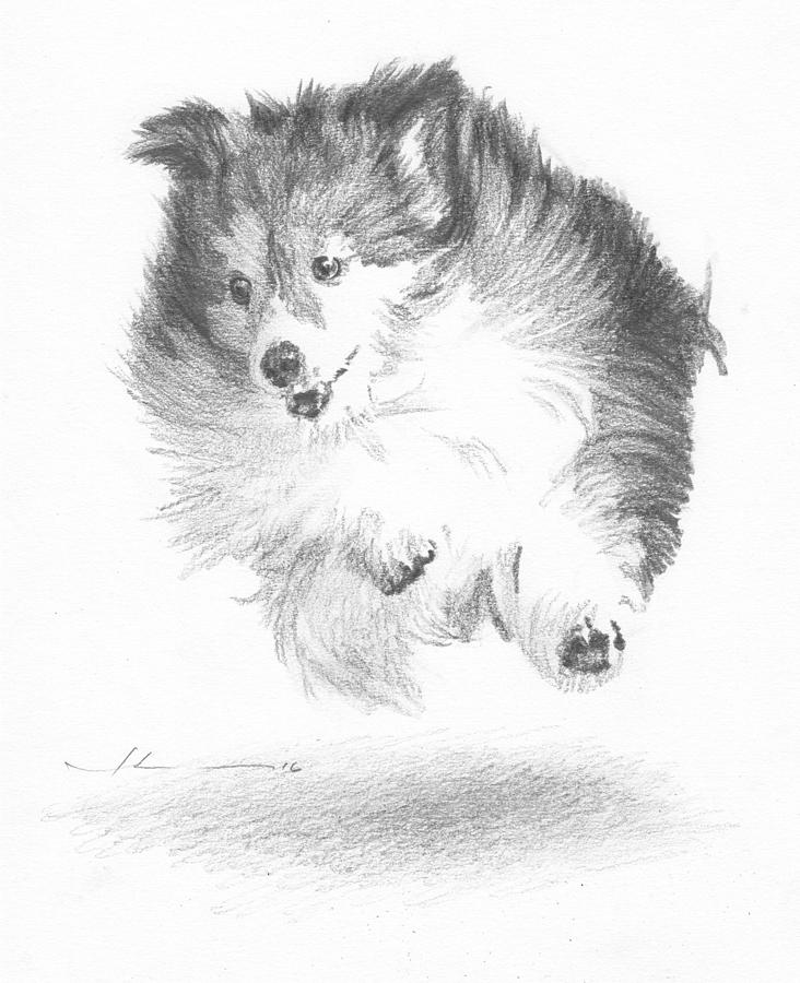 Running Sheltie Pencil Porrait Drawing by Mike Theuer