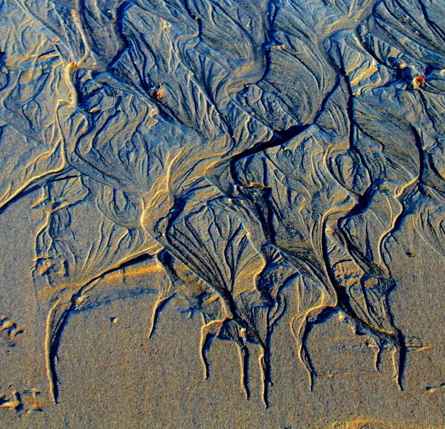 Nature Photograph - Runoff 2b by Robert Morin