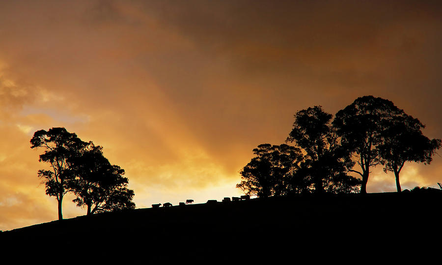 Sunset Photograph - Rural Glory by Mike  Dawson
