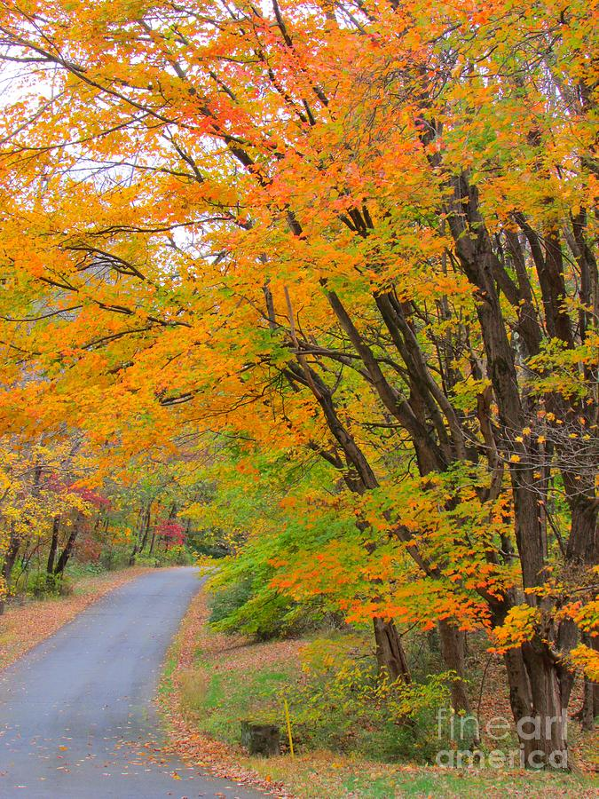 Landscape Photograph - Rural Road by Anne Ditmars