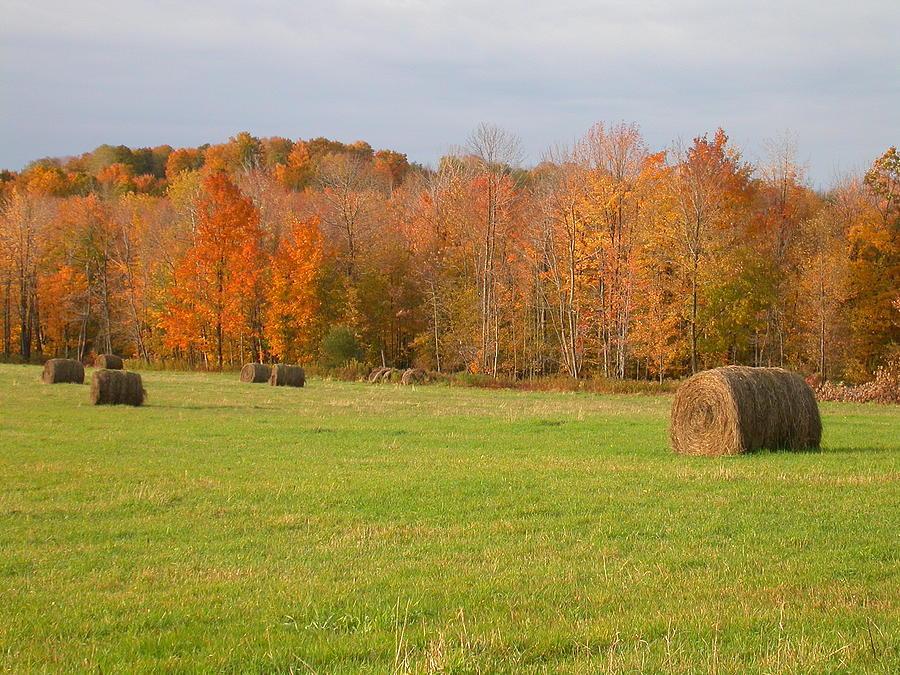 Autumn Photograph - Rural Scene by Raju Alagawadi