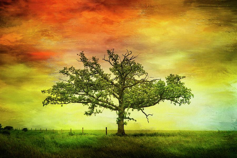 Rushford Tree on 43 by Al  Mueller