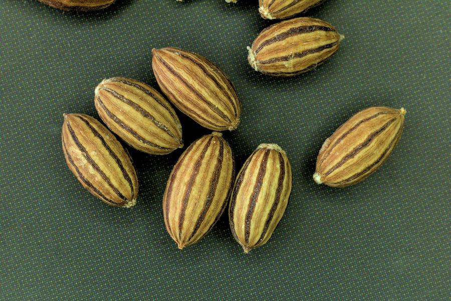 Russian Olive Seeds II by Scott Carlton