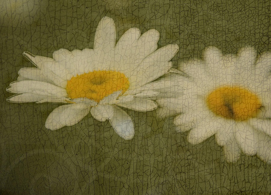 Texture Photograph - Rustic Daisies by Tingy Wende