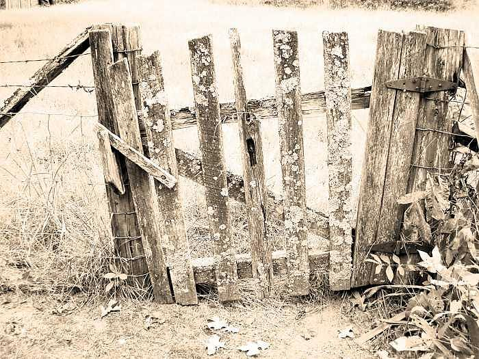 Rustic Fence Photograph by Scarlett Chambers
