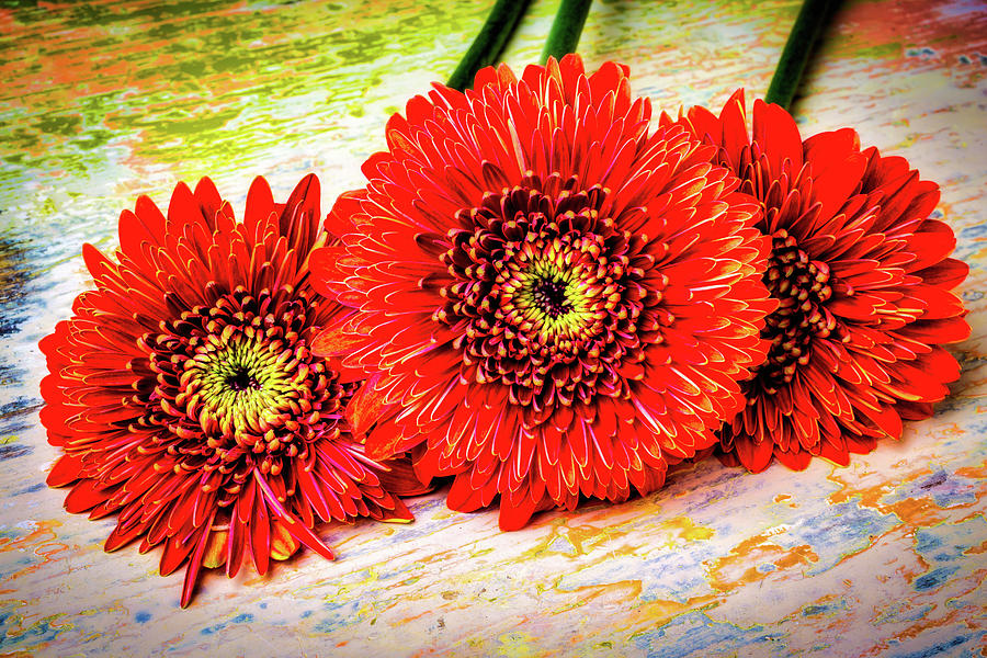 Mood Photograph - Rustic Red Dasies by Garry Gay