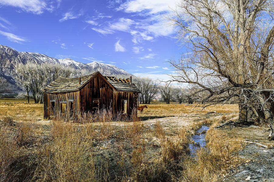 Rustic Scene Out Of The Old West Photograph By PhotoWorks Don