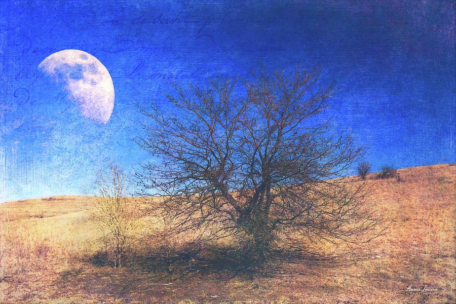 Rustic Winter Prairie by Anna Louise