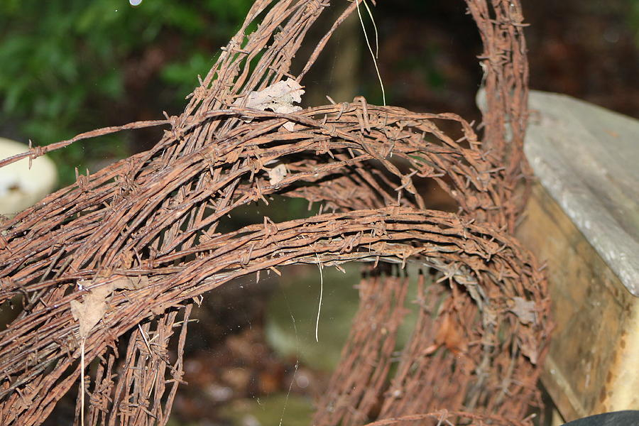 Barbed Wire Photograph - Rusty Barb by Christina Pope