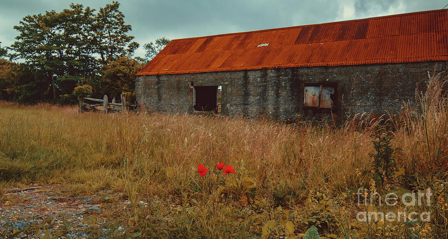Red Photograph - Rusty Barn by Marc Daly