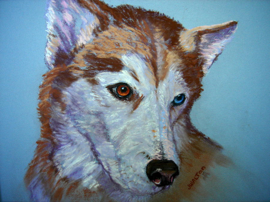 Husky Painting - Rusty by Judy Fischer Walton