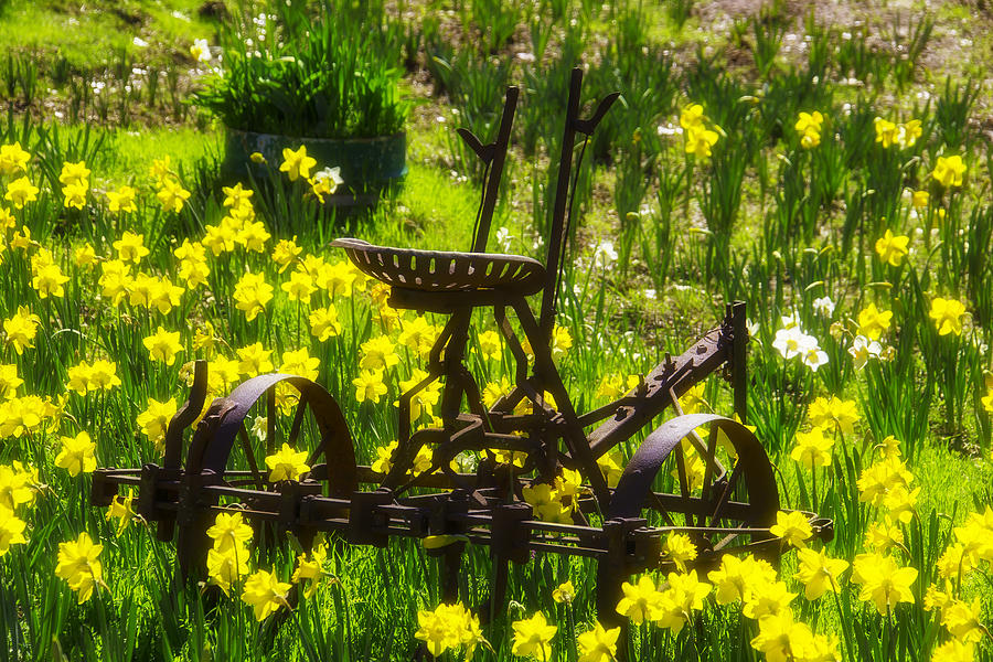 Old Photograph - Rusty Plow In Daffodils  by Garry Gay