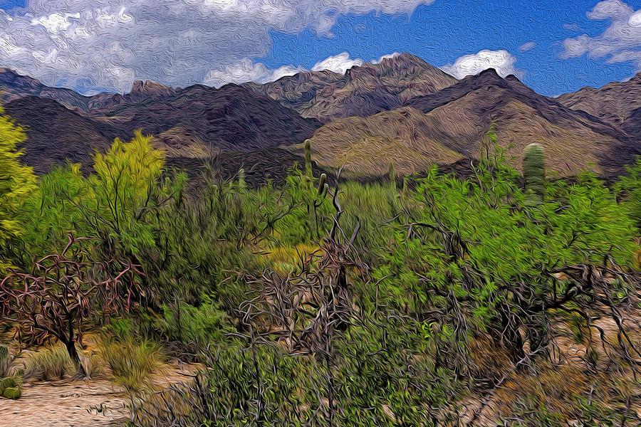 Sabino Canyon No57 Photograph